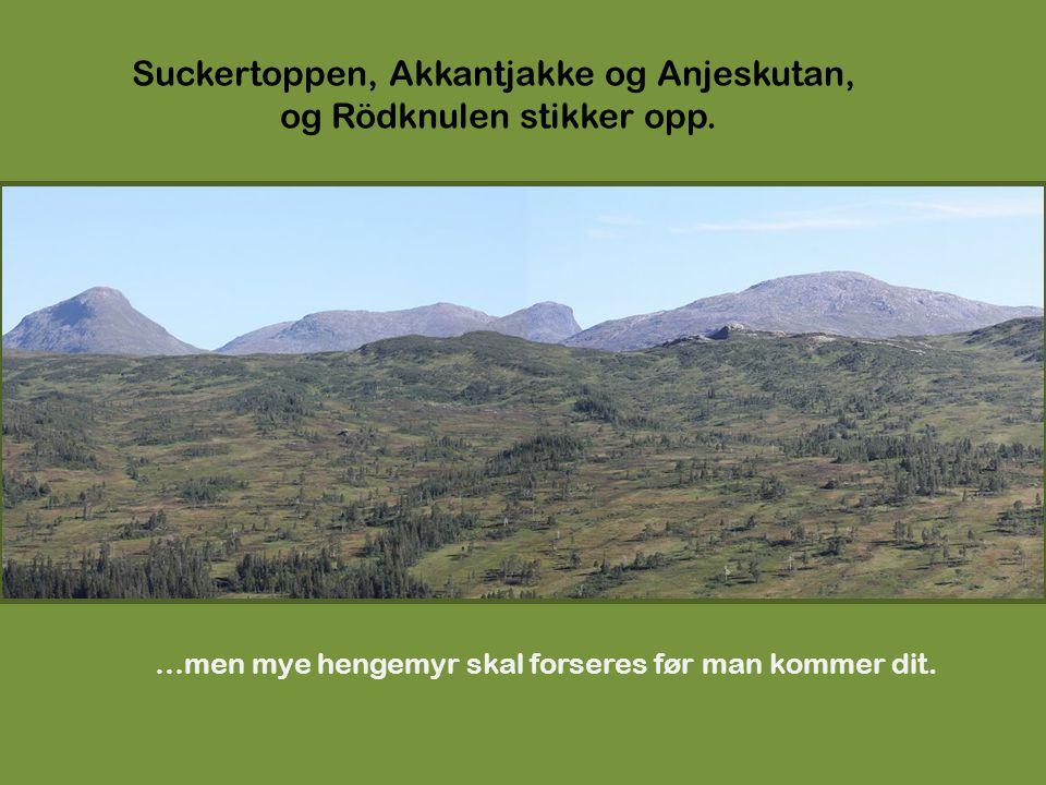 Suckertoppen, Akkantjakke og Anjeskutan, og Rödknulen stikker opp. …men mye hengemyr skal forseres før man kommer dit.