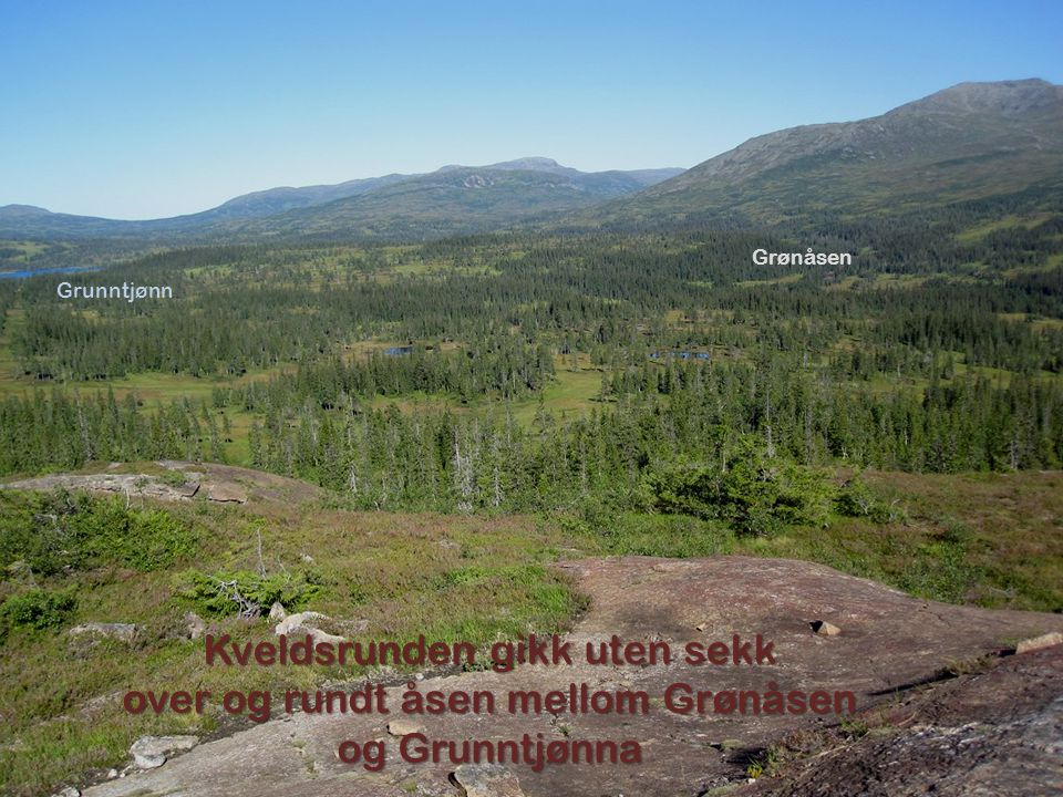 Grunntjønn Grønåsen Kveldsrunden gikk uten sekk over og rundt åsen mellom Grønåsen og Grunntjønna
