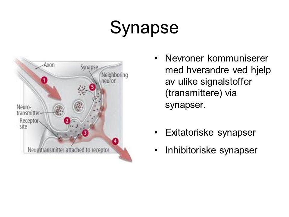 Synapse •Nevroner kommuniserer med hverandre ved hjelp av ulike signalstoffer (transmittere) via synapser. •Exitatoriske synapser •Inhibitoriske synap