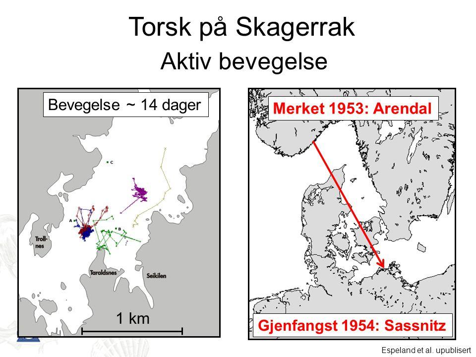 Aktiv bevegelse Bevegelse ~ 14 dager 1 km Merket 1953: Arendal Gjenfangst 1954: Sassnitz Torsk på Skagerrak Espeland et al. upublisert
