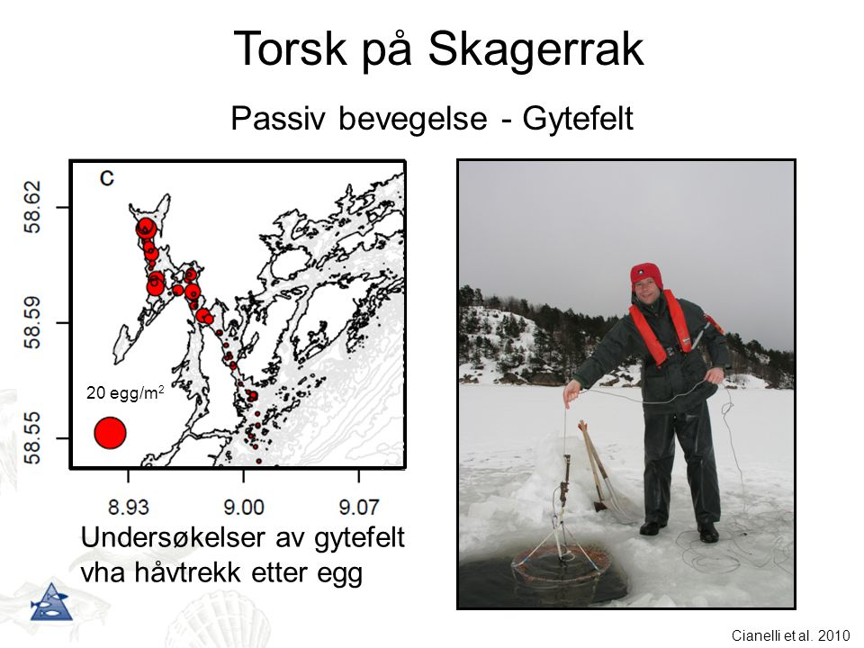 20 egg/m 2 Undersøkelser av gytefelt vha håvtrekk etter egg Passiv bevegelse - Gytefelt Torsk på Skagerrak Cianelli et al. 2010