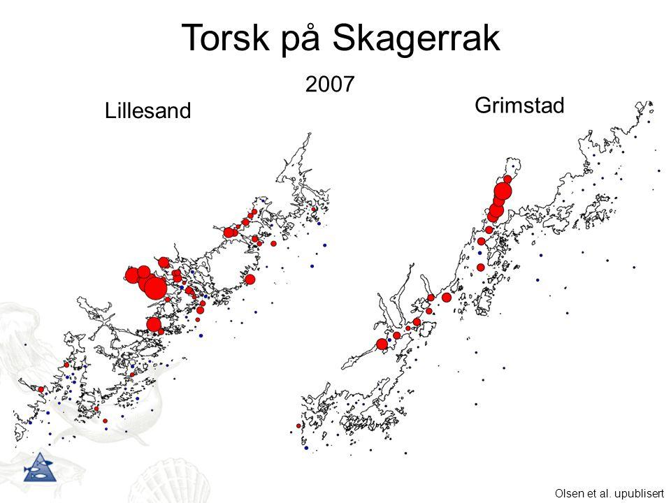 Grimstad Lillesand 2007 Torsk på Skagerrak Olsen et al. upublisert