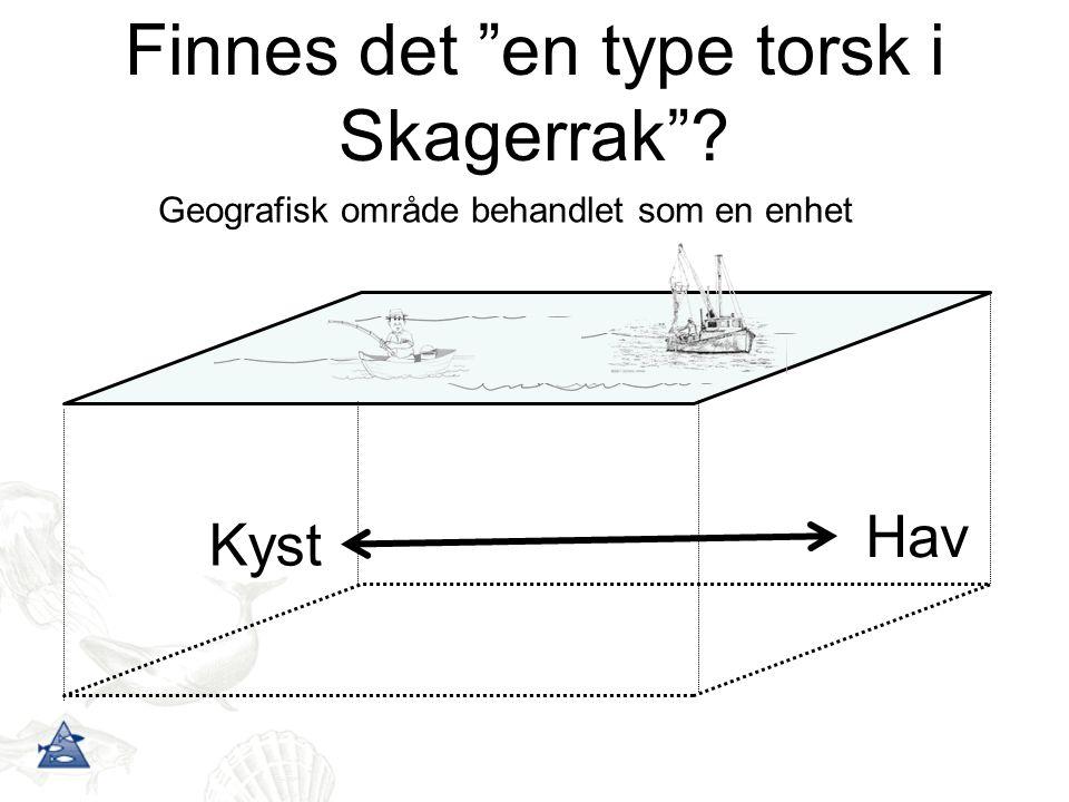 """Geografisk område behandlet som en enhet Finnes det """"en type torsk i Skagerrak""""? Kyst Hav"""