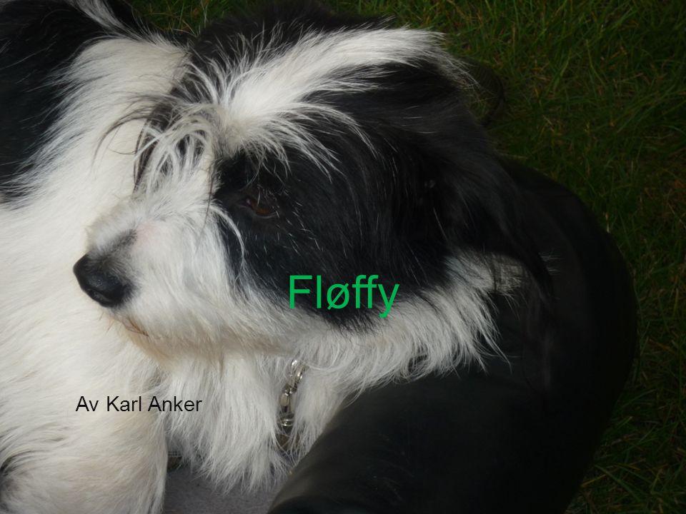Fløffy sin personlighet Fløffy er ganske søt, men fløffy er også rampete, hun hopper oppå ting, å det er fy fy, men hun er nusselig, å derfor kan man ikke vere streng på henne, og det er dumt, det er veldig dumt, også er det en ting som er synn for hunden, hun er redd for hamsteren vår:-P