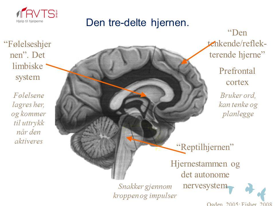 """Den tre-delte hjernen. """"Reptilhjernen"""" Hjernestammen og det autonome nervesystem """"Følelseshjer nen"""". Det limbiske system """"Den tenkende/reflek- terende"""