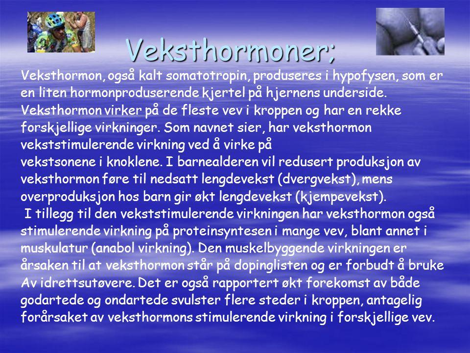 Veksthormoner; Veksthormon, også kalt somatotropin, produseres i hypofysen, som er en liten hormonproduserende kjertel på hjernens underside. Veksthor