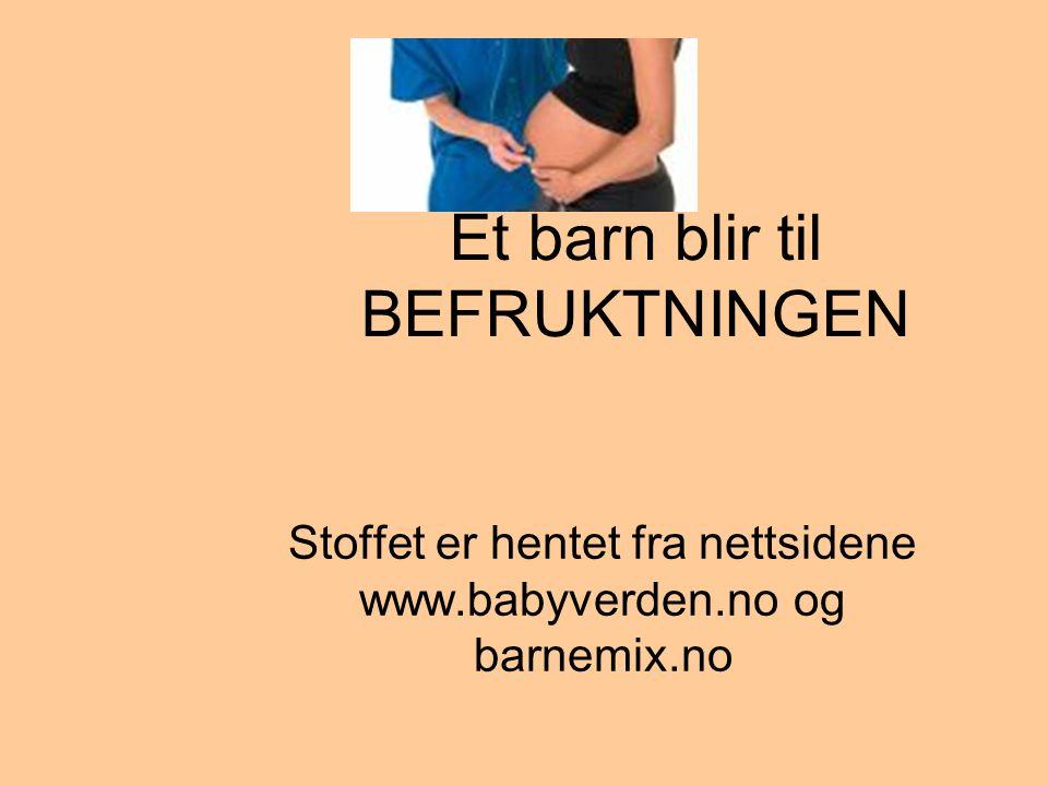 Et barn blir til BEFRUKTNINGEN Stoffet er hentet fra nettsidene www.babyverden.no og barnemix.no