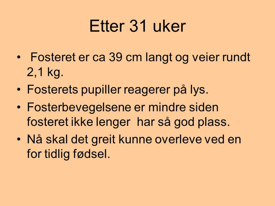 Etter 31 uker • Fosteret er ca 39 cm langt og veier rundt 2,1 kg. •Fosterets pupiller reagerer på lys. •Fosterbevegelsene er mindre siden fosteret ikk