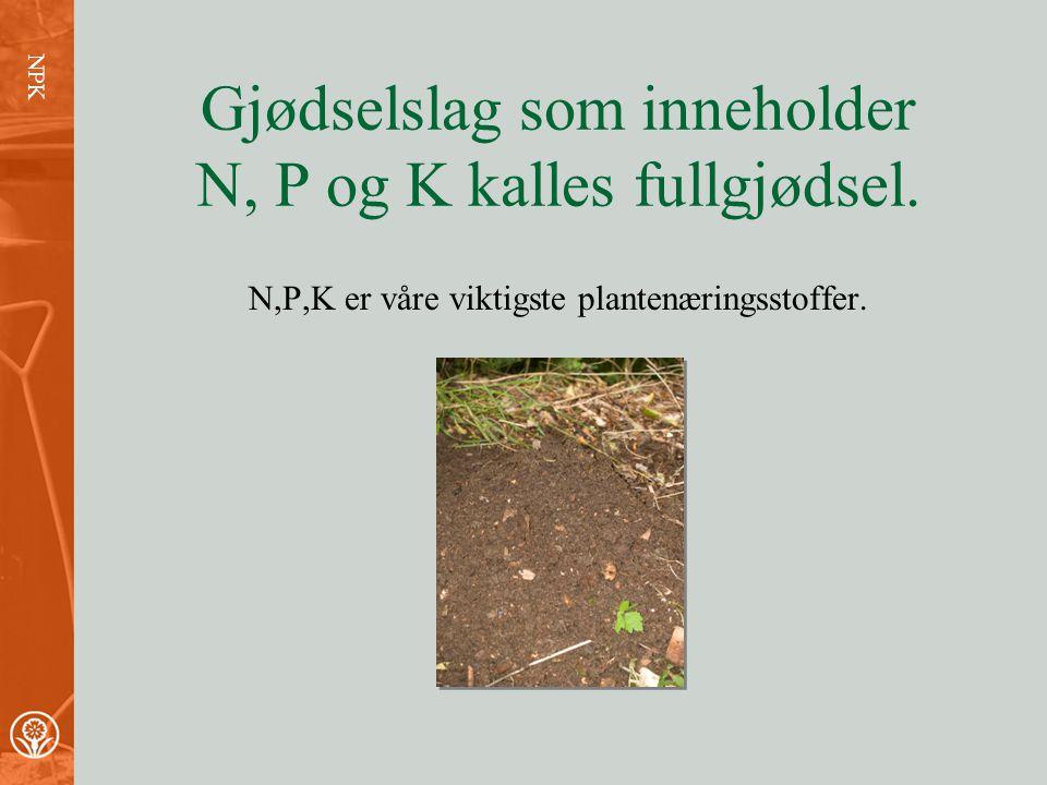 NPK nitrogen fosfor kalium Litt om plantenæring
