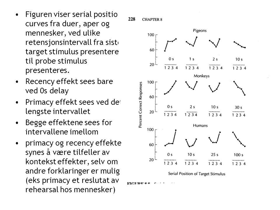 •Figuren viser serial position curves fra duer, aper og mennesker, ved ulike retensjonsintervall fra siste target stimulus presenteres til probe stimulus presenteres.
