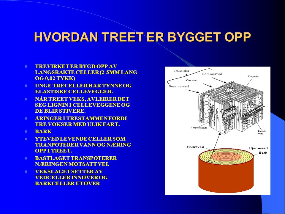 HVORDAN TREET ER BYGGET OPP  TREVIRKET ER BYGD OPP AV LANGSRAKTE CELLER (2-5MM LANG OG 0,02 TYKK)  UNGE TRECELLER HAR TYNNE OG ELASTISKE CELLEVEGGER