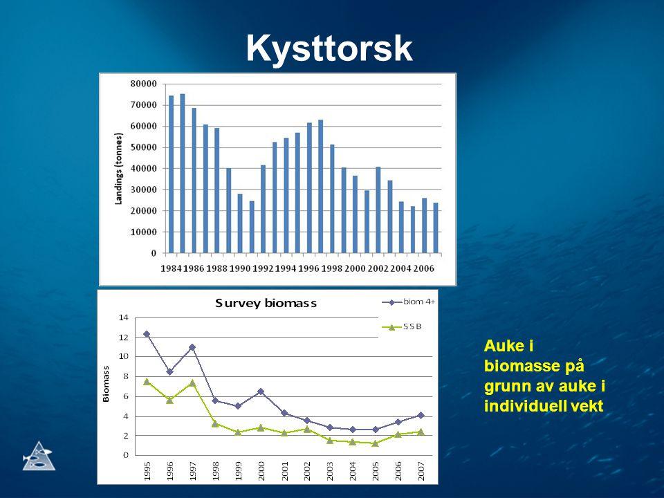 Kysttorsk Auke i biomasse på grunn av auke i individuell vekt