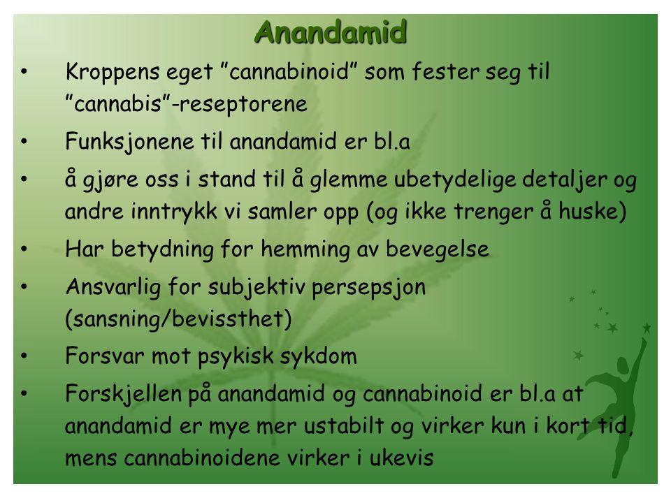 """Anandamid • Kroppens eget """"cannabinoid"""" som fester seg til """"cannabis""""-reseptorene • Funksjonene til anandamid er bl.a • å gjøre oss i stand til å glem"""