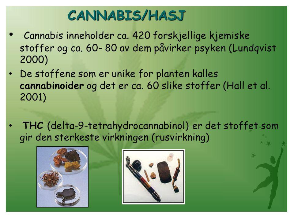 CANNABIS/HASJ • Cannabis inneholder ca. 420 forskjellige kjemiske stoffer og ca. 60- 80 av dem påvirker psyken (Lundqvist 2000) • De stoffene som er u