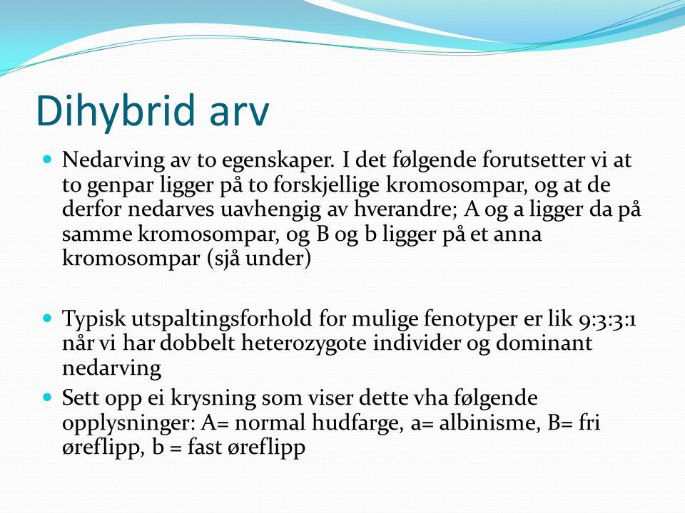 Dihybrid arv  Nedarving av to egenskaper. I det følgende forutsetter vi at to genpar ligger på to forskjellige kromosompar, og at de derfor nedarves