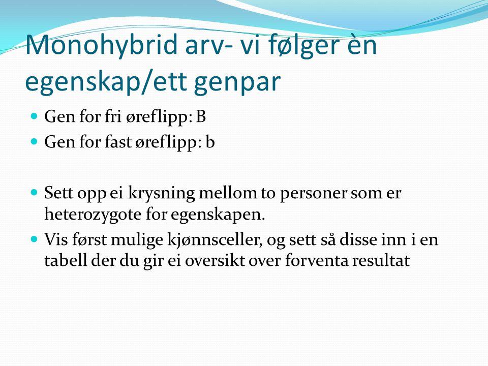 Monohybrid arv- vi følger èn egenskap/ett genpar  Gen for fri øreflipp: B  Gen for fast øreflipp: b  Sett opp ei krysning mellom to personer som er