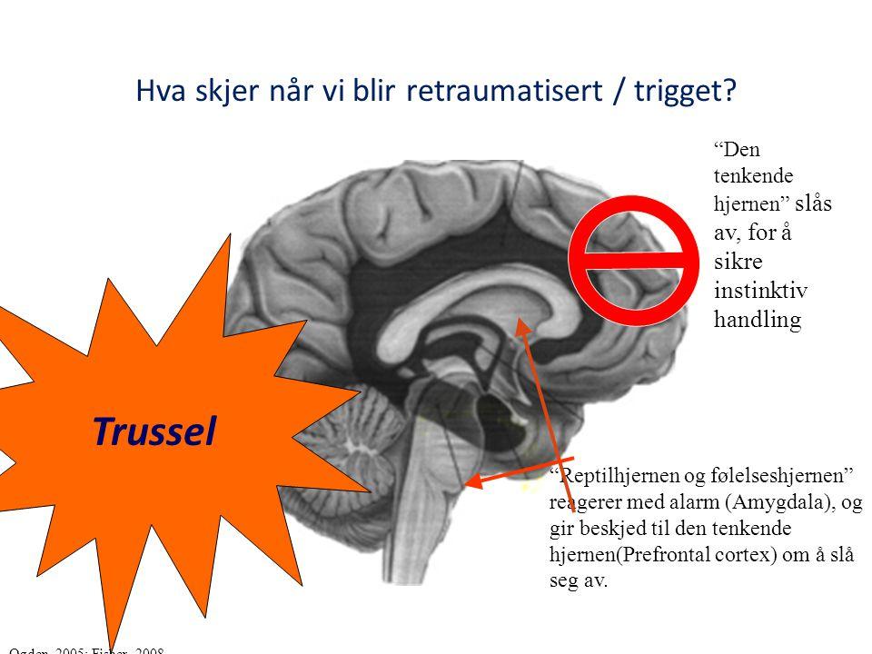 """Hva skjer når vi blir retraumatisert / trigget? """"Reptilhjernen og følelseshjernen"""" reagerer med alarm (Amygdala), og gir beskjed til den tenkende hjer"""