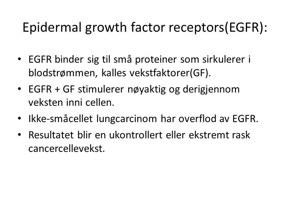 Epidermal growth factor receptors(EGFR): • EGFR binder sig til små proteiner som sirkulerer i blodstrømmen, kalles vekstfaktorer(GF). • EGFR + GF stim