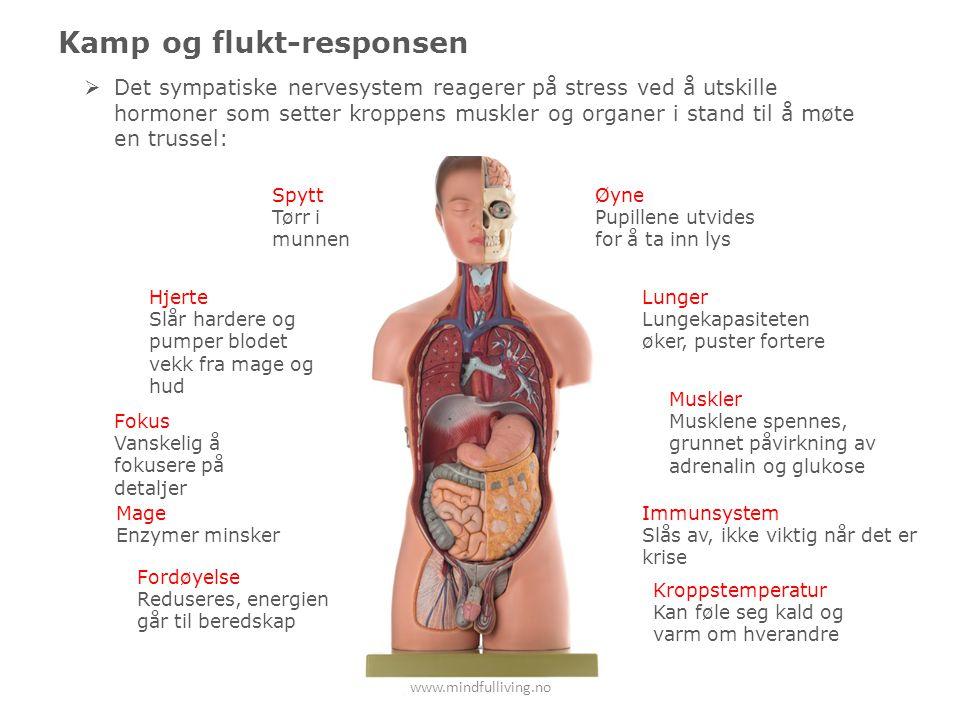 www.mindfulliving.no Kamp og flukt-responsen Øyne Pupillene utvides for å ta inn lys Spytt Tørr i munnen Lunger Lungekapasiteten øker, puster fortere