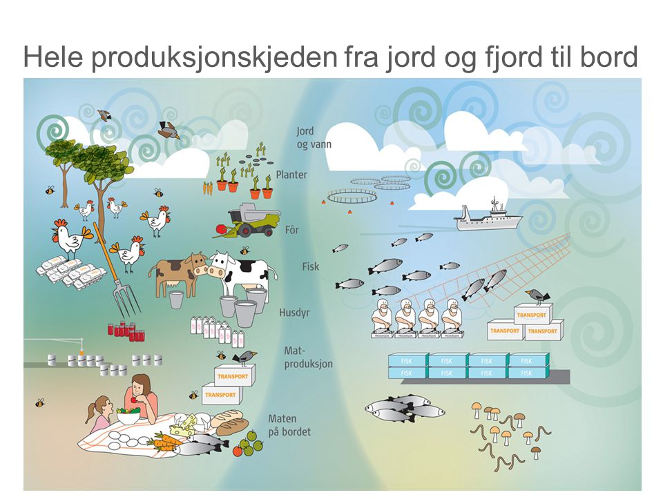 Hele produksjonskjeden fra jord og fjord til bord
