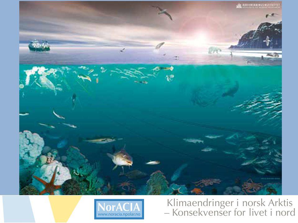 limaendringer i norsk Arktis – Knsekvenser for livet i nord