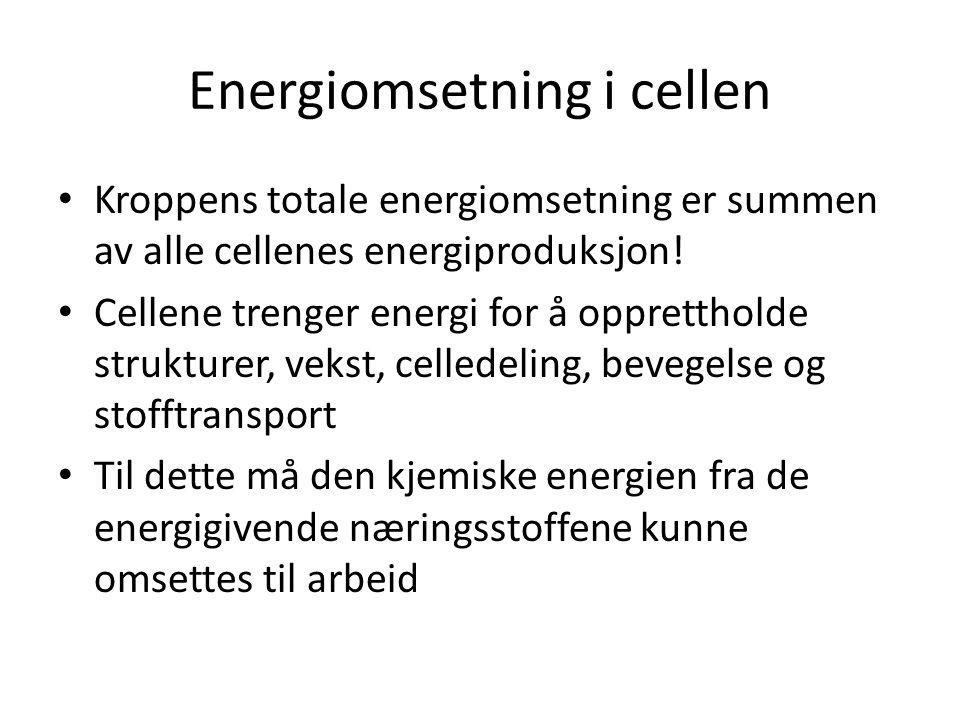 Energiomsetning i cellen • Kroppens totale energiomsetning er summen av alle cellenes energiproduksjon! • Cellene trenger energi for å opprettholde st
