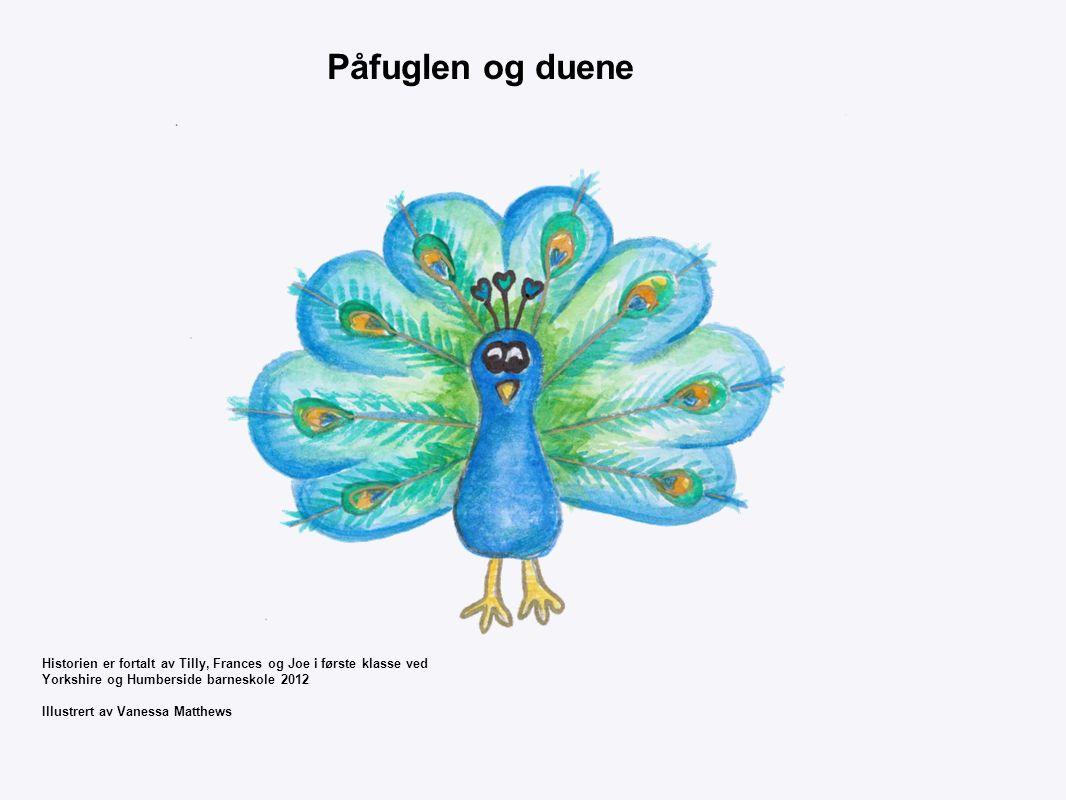 Påfuglen og duene Historien er fortalt av Tilly, Frances og Joe i første klasse ved Yorkshire og Humberside barneskole 2012 Illustrert av Vanessa Matthews