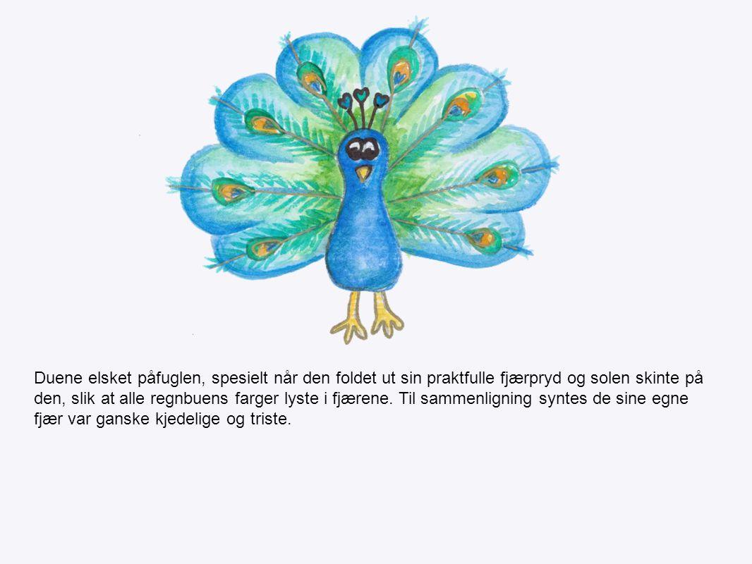 Duene elsket påfuglen, spesielt når den foldet ut sin praktfulle fjærpryd og solen skinte på den, slik at alle regnbuens farger lyste i fjærene.