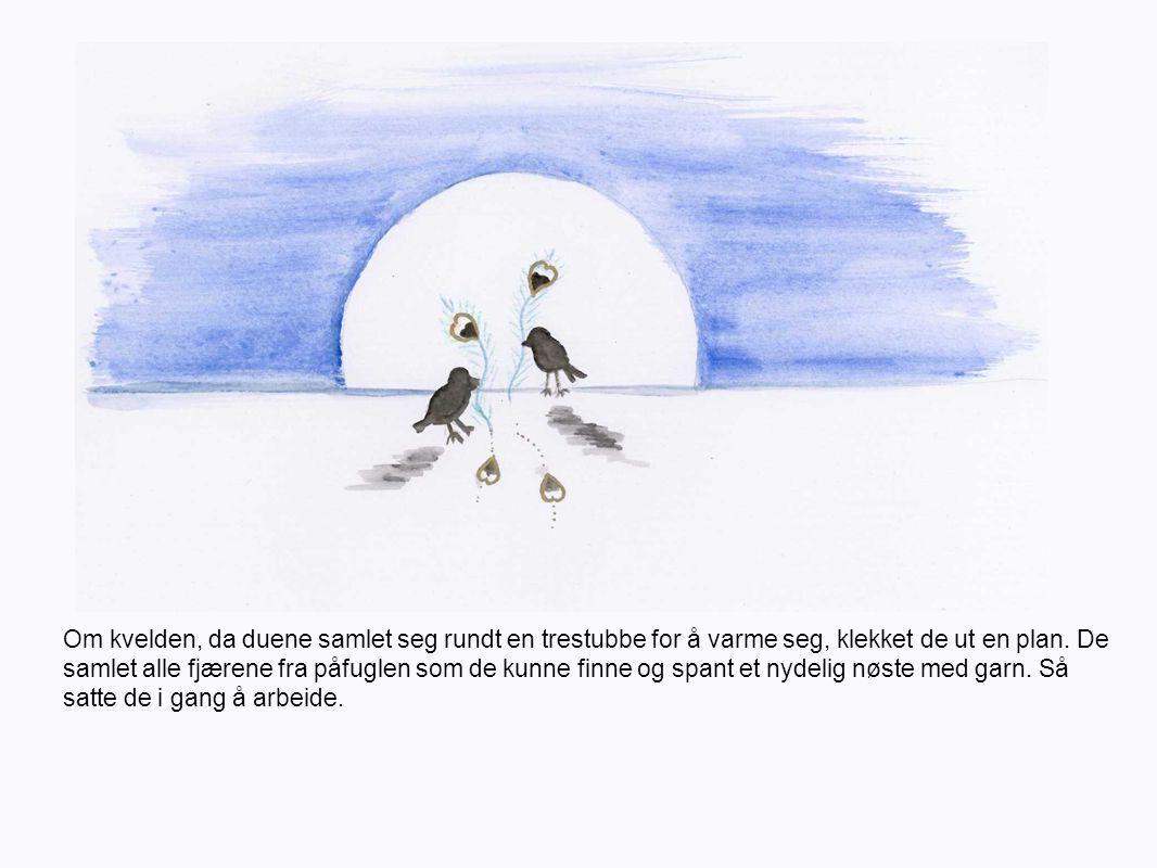 Neste morgen gav duene påfuglen en frakk strikket av garnet.