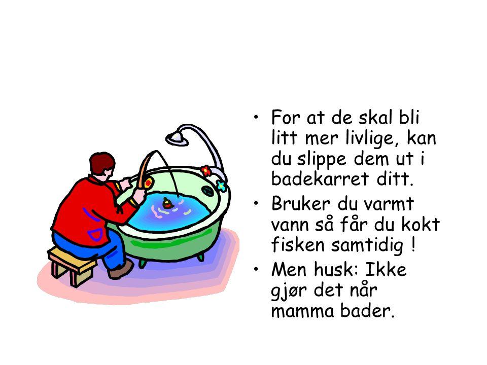 •Om du ikke vil dra så langt for å fiske, så kan du kjøpe fisk på boks.