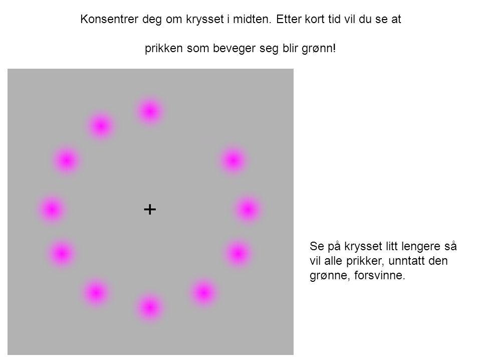 Konsentrer deg om krysset i midten. Etter kort tid vil du se at prikken som beveger seg blir grønn! Se på krysset litt lengere så vil alle prikker, un