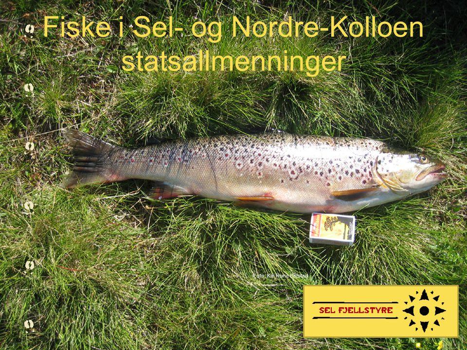 Fiske i Sel- og Nordre-Kolloen statsallmenninger Foto: Kai Rune Båtstad