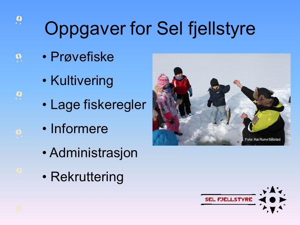 Oppgaver for Sel fjellstyre • Prøvefiske • Kultivering • Lage fiskeregler • Informere • Administrasjon • Rekruttering Foto: Kai Rune Båtstad