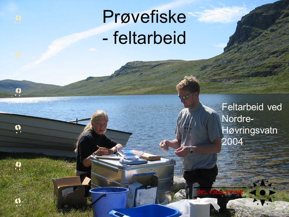 Feltarbeid ved Nordre- Høvringsvatn 2004. Prøvefiske - feltarbeid