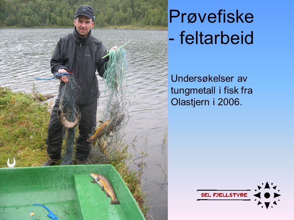 Prøvefiske - bearbeiding av data • Registrerer lengde, vekt, kjønn, modningsgrad, mageinnhold osv • Kondisjonsfaktor • Når er fisken gytemoden • Hvilken lengdegruppe det er mest av • Hva den spiser