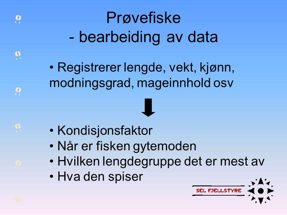 Prøvefiske - bearbeiding av data • Registrerer lengde, vekt, kjønn, modningsgrad, mageinnhold osv • Kondisjonsfaktor • Når er fisken gytemoden • Hvilk