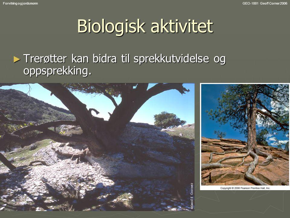 GEO-1001 Geoff Corner 2006Forvitring og jordsmonn Biologisk aktivitet ► Trerøtter kan bidra til sprekkutvidelse og oppsprekking.