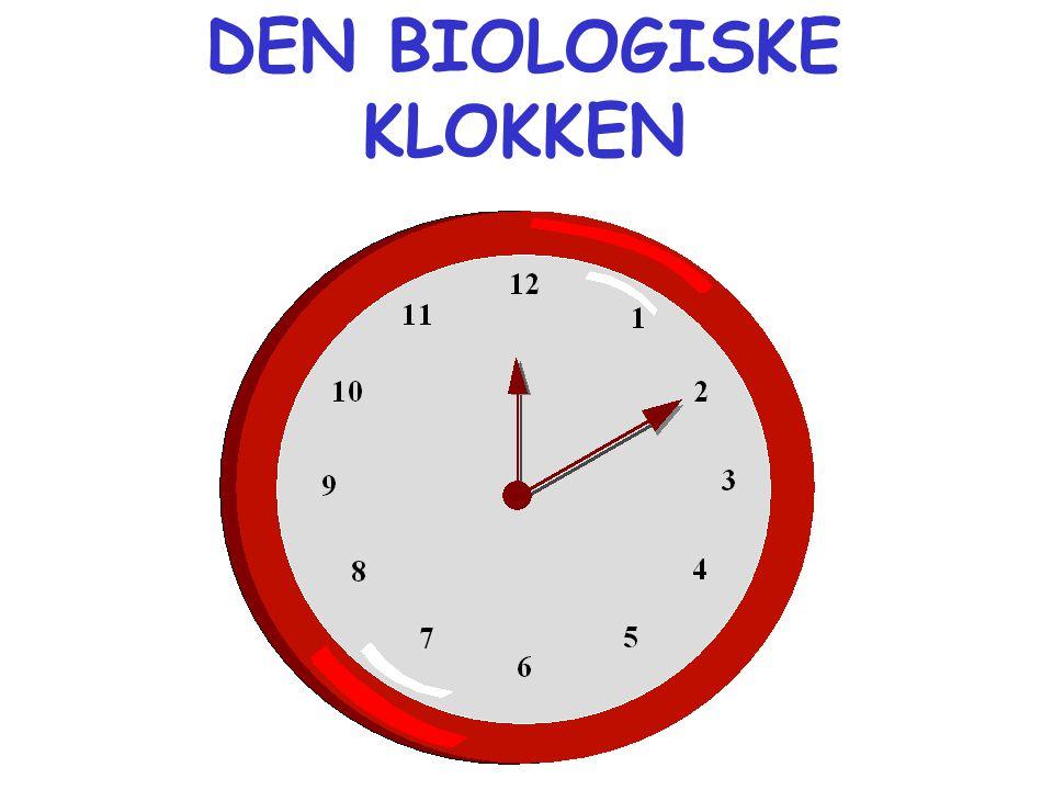 DEN BIOLOGISKE KLOKKEN