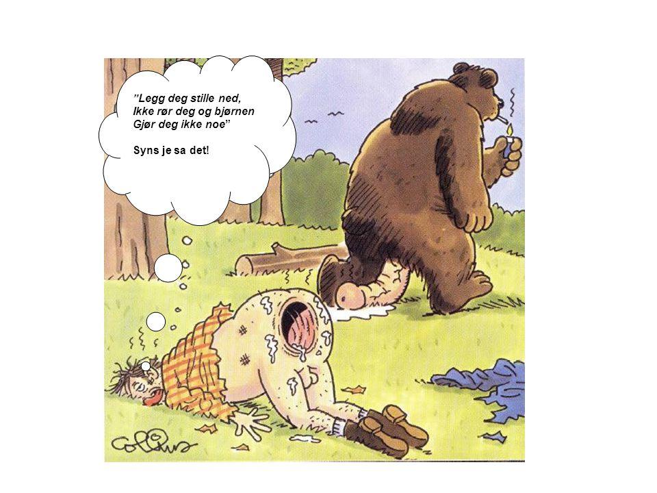"""""""Legg deg stille ned, Ikke rør deg og bjørnen Gjør deg ikke noe"""" Syns je sa det!"""