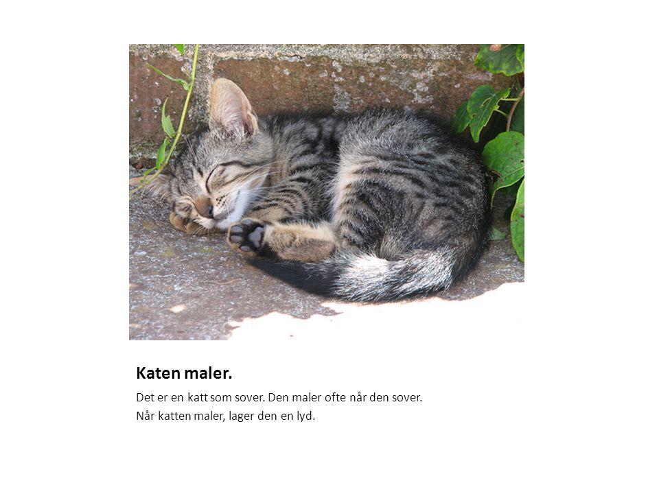 Katen maler. Det er en katt som sover. Den maler ofte når den sover. Når katten maler, lager den en lyd.