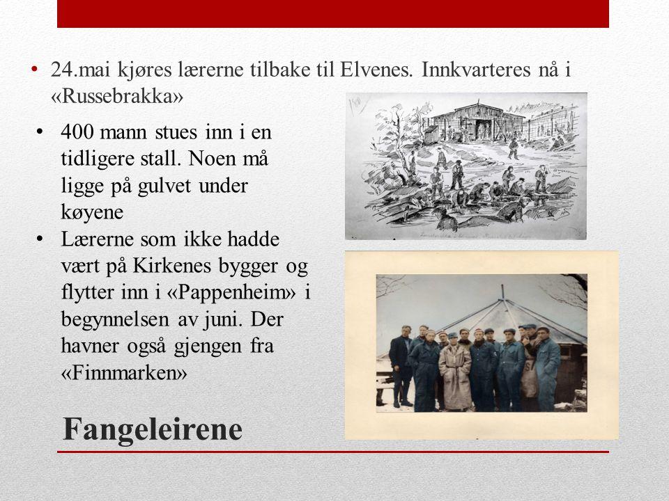 Fangeleirene • 24.mai kjøres lærerne tilbake til Elvenes. Innkvarteres nå i «Russebrakka» • 400 mann stues inn i en tidligere stall. Noen må ligge på