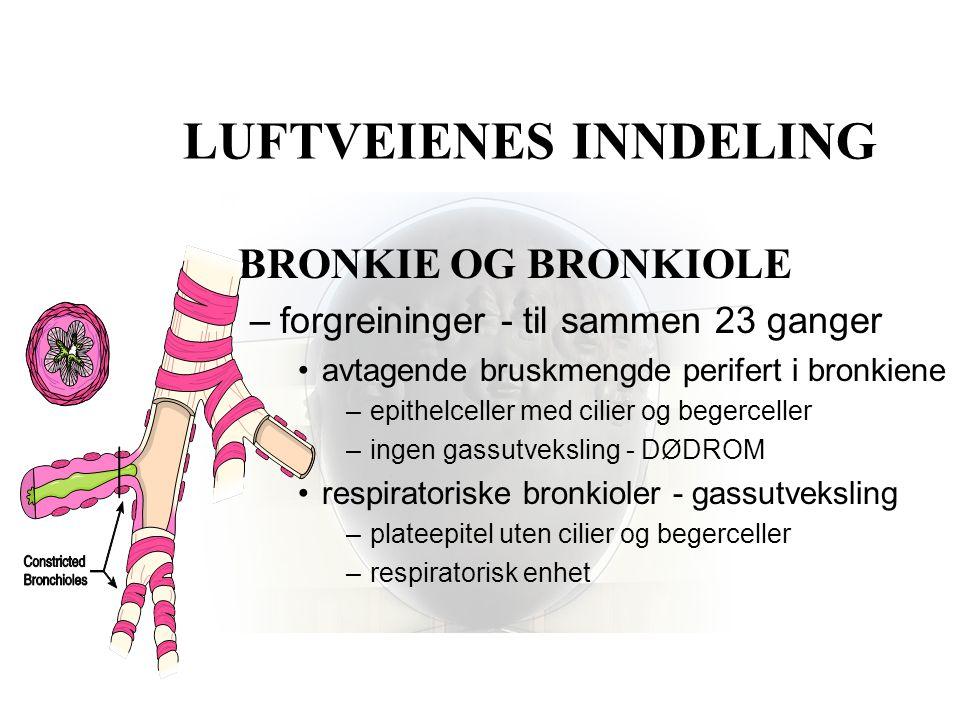 LUFTVEIENES INNDELING •BRONKIE OG BRONKIOLE –forgreininger - til sammen 23 ganger •avtagende bruskmengde perifert i bronkiene –epithelceller med cilie
