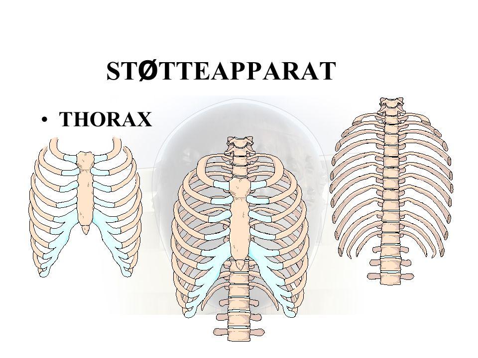 ST Ø TTEAPPARAT •THORAX