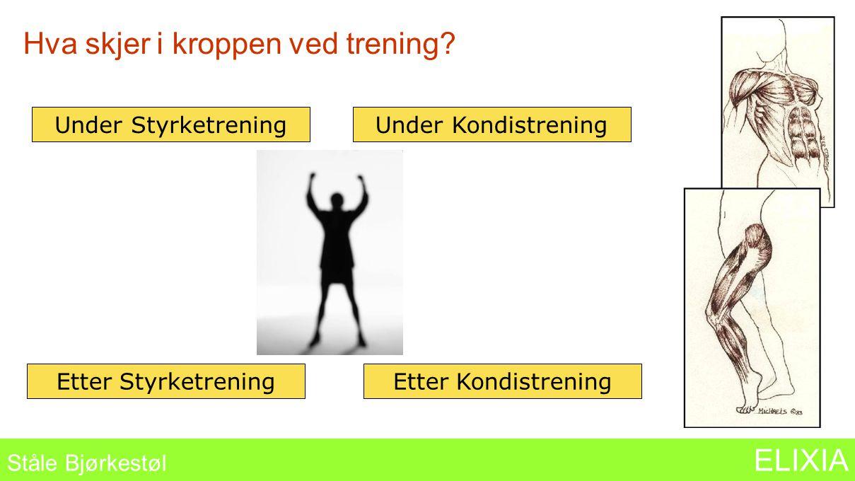 Hva skjer i kroppen ved trening? Ståle Bjørkestøl ELIXIA Under StyrketreningUnder Kondistrening Etter StyrketreningEtter Kondistrening