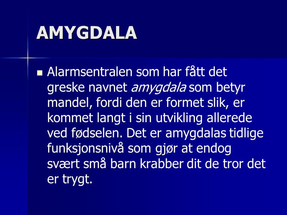 AMYGDALA   Alarmsentralen som har fått det greske navnet amygdala som betyr mandel, fordi den er formet slik, er kommet langt i sin utvikling allerede ved fødselen.