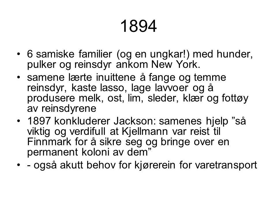 1894 •6 samiske familier (og en ungkar!) med hunder, pulker og reinsdyr ankom New York. •samene lærte inuittene å fange og temme reinsdyr, kaste lasso