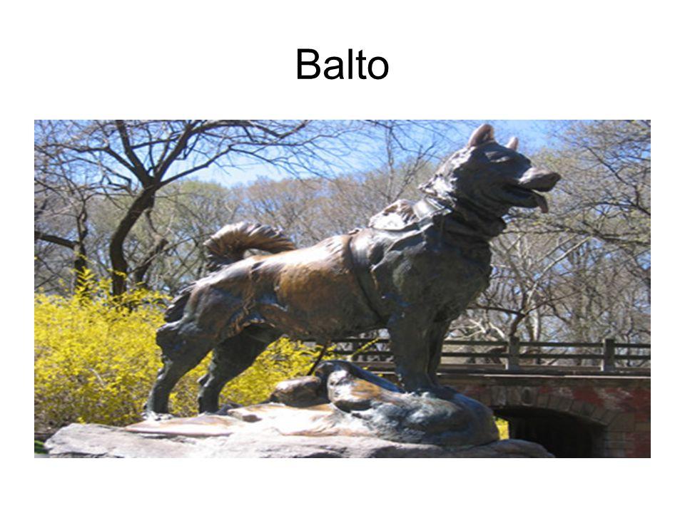 Balto er en sibirsk husky, men også et samisk navn •1995 Disney: The true story of Balto •bak fortellingen en hendelse fra 1925: i januar fikk man et voldsomt utbrudd av difteri i Nome, Alaska.