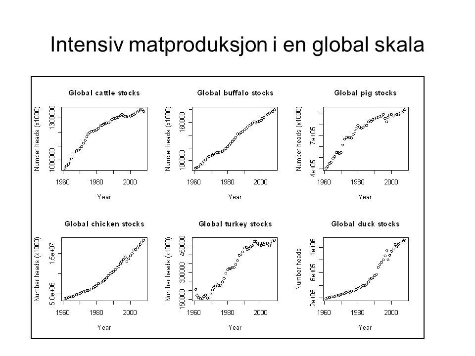 Intensiv matproduksjon i en global skala