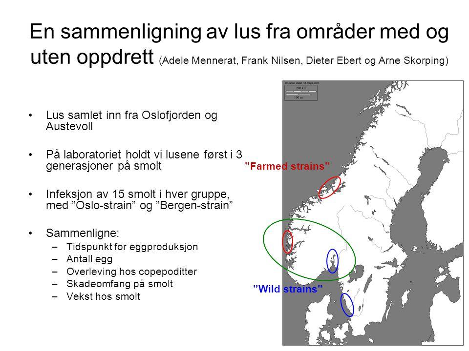 En sammenligning av lus fra områder med og uten oppdrett (Adele Mennerat, Frank Nilsen, Dieter Ebert og Arne Skorping) •Lus samlet inn fra Oslofjorden