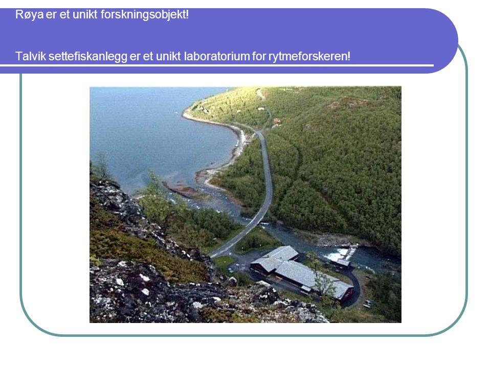 Røya er et unikt forskningsobjekt.
